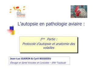 autopsie.pdf